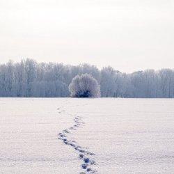 evitar pies frios inviernos